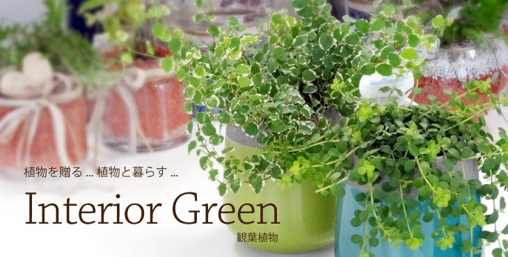 インテリアグリーン 観葉植物